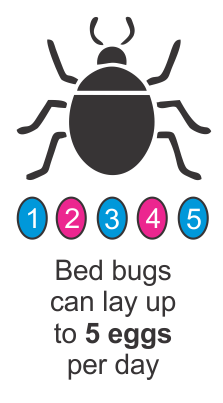 Bed Bugs Can Lay Up To 5 Eggs Per Day